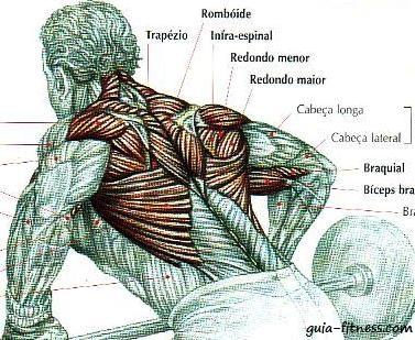 anatomia costas