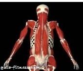 treino core integral-complexo lombar-core
