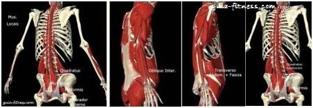 treino core integral-musculos estabilizadores-anatomia