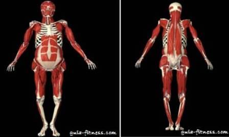 treino core integral-musculos-core