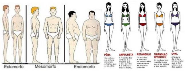 ganhar peso-tipos de corpo-endomorfo-ectomorfo-mesomorfo