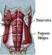 anatomia abdominal