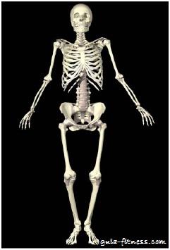 treino core integral-esqueleto-core
